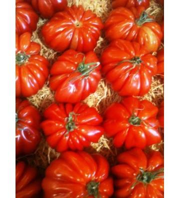 Tomates reine de coeur 1 Kg