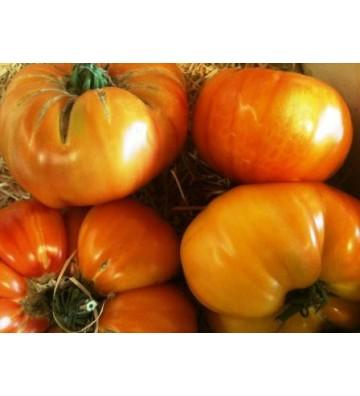 Tomate Ananas 1 Kg