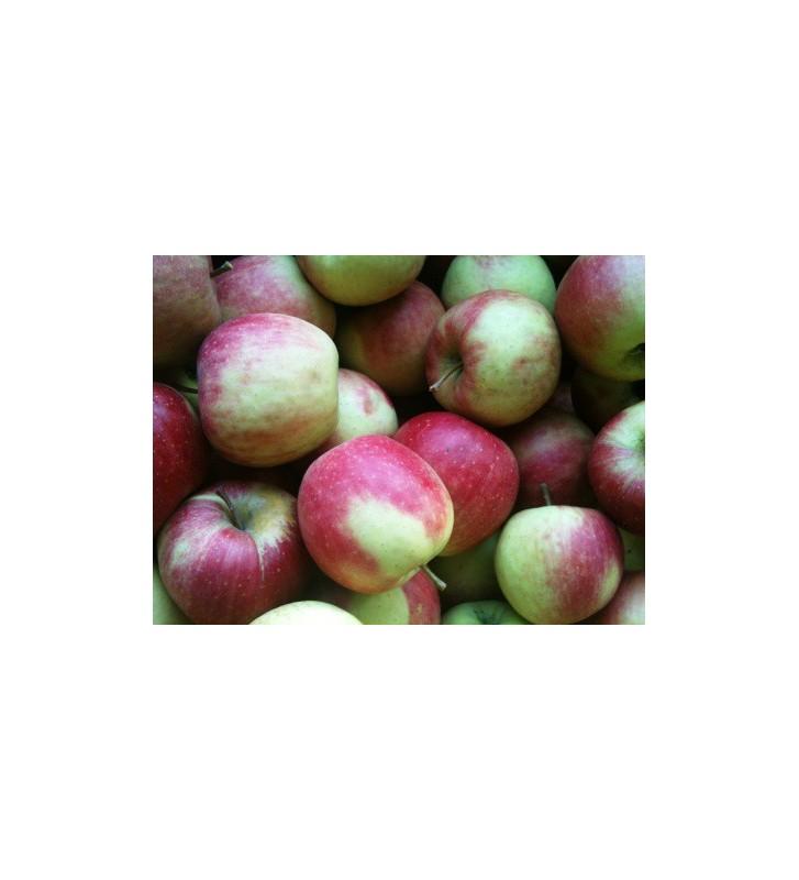 Pomme Falstaff Vrac 1 Kg