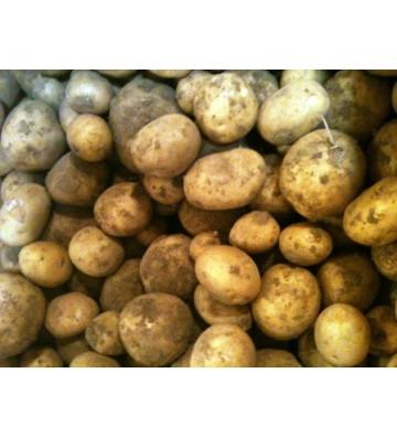 Pomme de terre Sirco 25 Kg