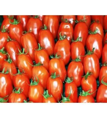 Tomate allongée - Torino 1 Kg