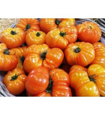 Tomate côtelée - Ananas 1 Kg