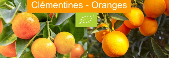 Oranges et Clémentines Bio