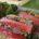 Terrine de boeuf à la jardinière de légumes