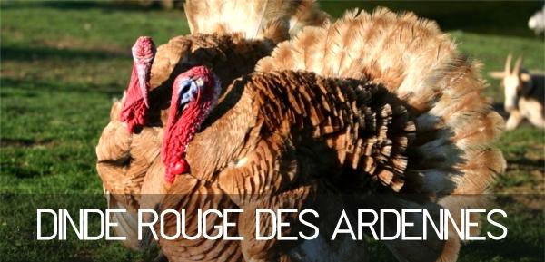 Bandeau Les Dindes rouges des Ardennes